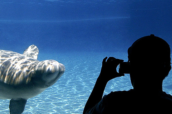 Student at an aquarium taking a photo of a dolphin